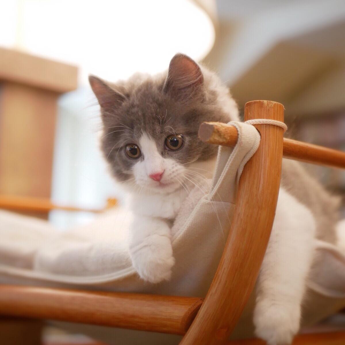 猫カフェ MOCHA(モカ)